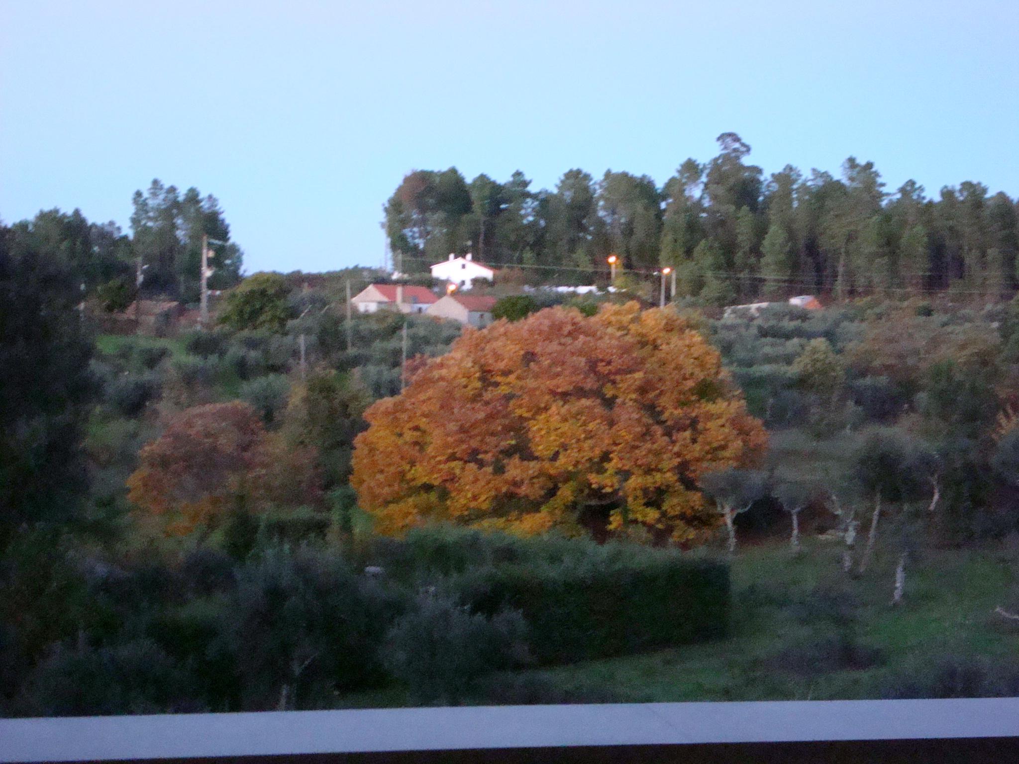 THE CHESTNUT TREE IN NOVEMBER
